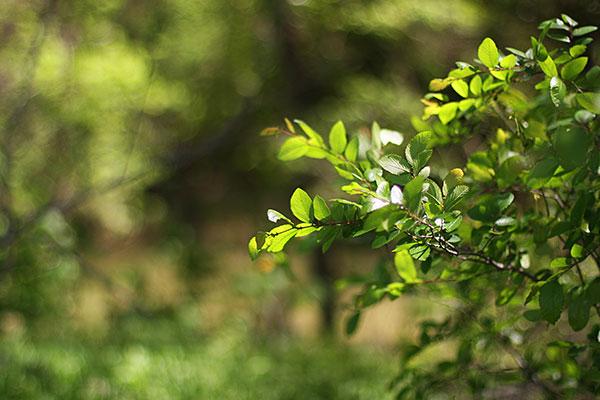 "Earthfest promotes ""greener"" community"