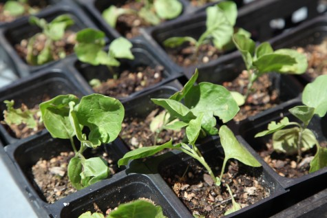 Coppell gets green with sustainability movement