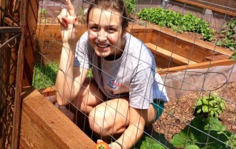 Hulme harvests homegrown produce