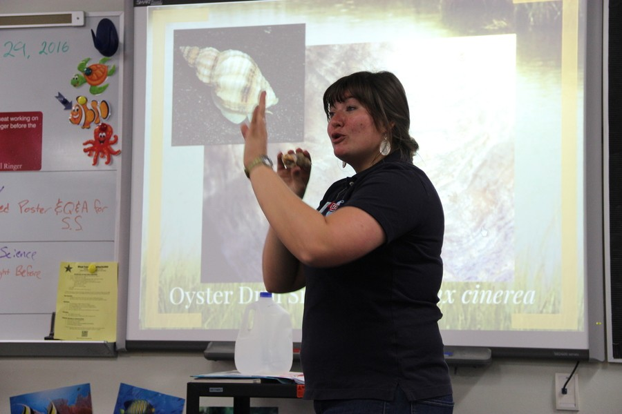 Rena Elser, the program coordinator of Texas A&M Sea Camp, gives a presentation about sea animals on Monday in Laronna Doggett's aquatic science classroom. During her presentation, Elser passed around massive sea shells and pearls from oysters.