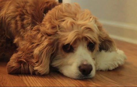 Non profit organization helps seniors manage pets