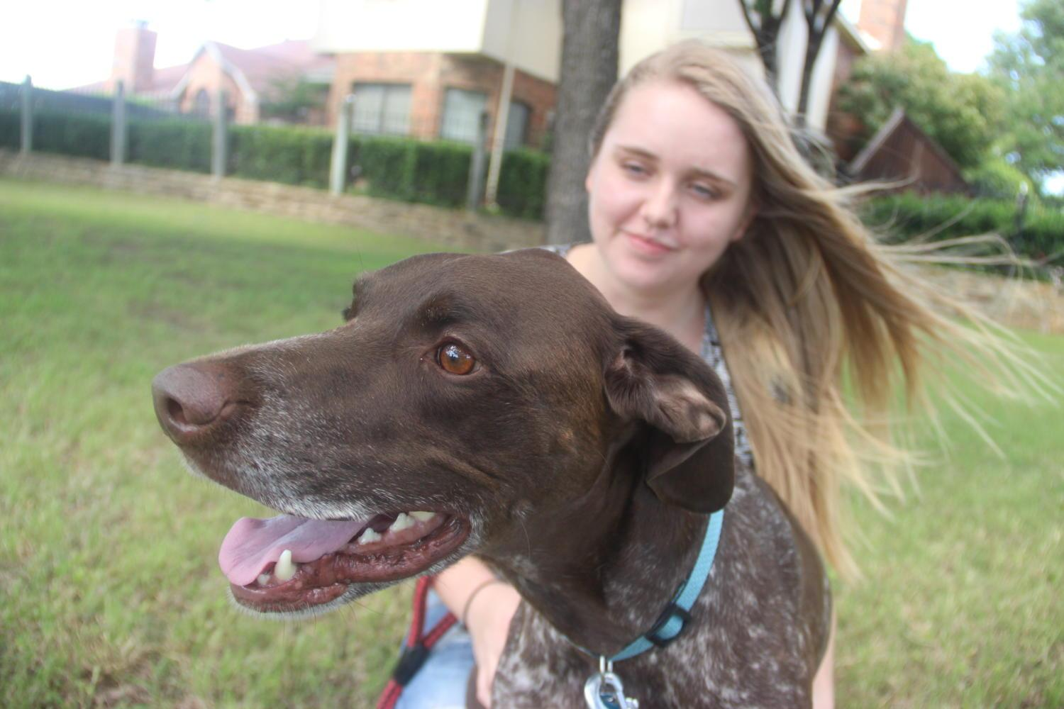 Coppell High School senior Lara Collins plays with her dog, a German Shorthaired Pointer named Sebastian, outside at Allen Road Park on May 1. Collins' passion for animals has inspired her to take a gap year to travel through Europe and Australia to gain experience with animals for her future career in Captive Wildlife Care.