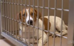 Local shelters foster lost pets