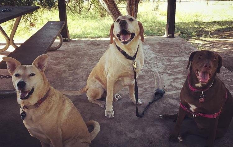 Three dogs enjoy the shade on Nov. 3 at Coppell dog park, Waggin' Tails. Since the dog park is an enclosed area, you can bring your dog with or without a leash.