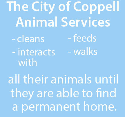 The City of Coppell Animal Services offers various amenities to the animals that reside there. Founded in 2000, it has recently launched a new program this May for volunteers who are 18 and up to interact and socialize with the animals.