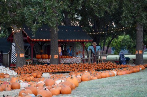 Annual pumpkin patch attracts Coppell residents at Rejoice Lutheran Church
