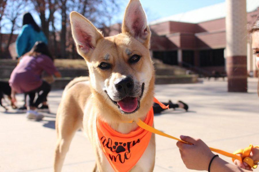 Video: CHETA brings puppies needing homes to campus