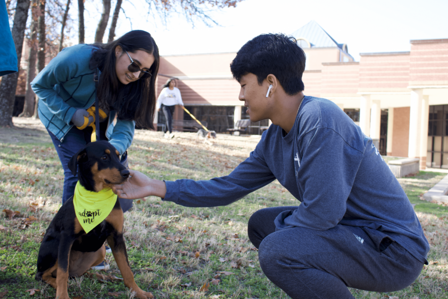 Coppell High School senior Chris Cho and junior Era Mahabaleshwakar petting Alice, a doberman mix, outside CHS on Saturday. Rescue dogs were brought from Coppell Animal Services to raise awareness of the importance of adoption.