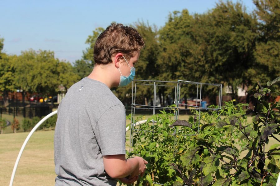 Coppell East eighth grader Stayton Slaughter works in the Coppell Middle School East garden on Friday. Coppell East science teacher Jodie Deinhammer created this garden to help foster student's learning.