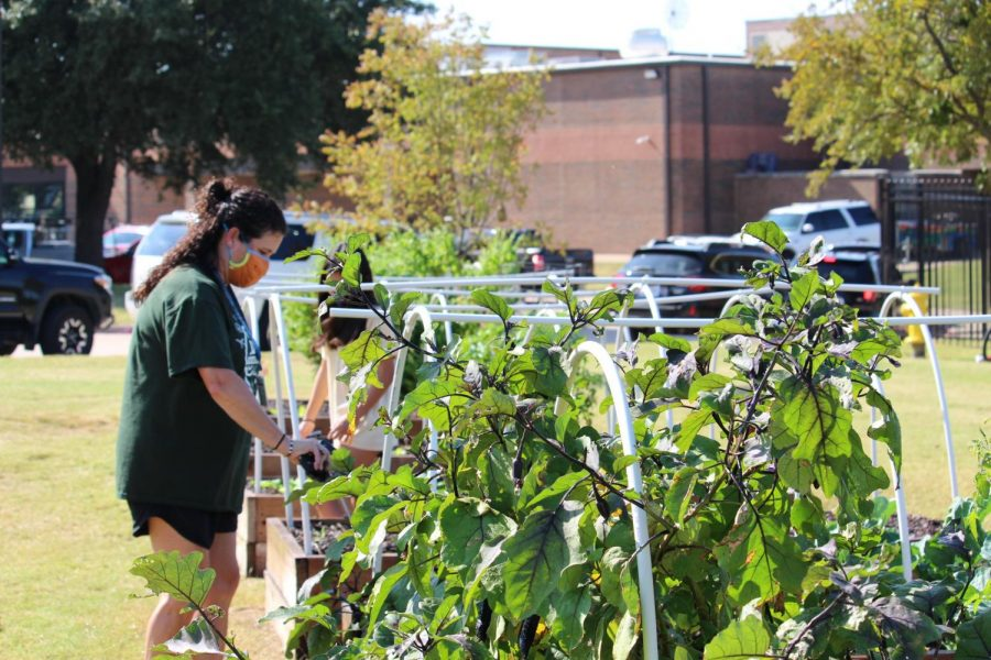 Coppell East science teacher Jodie Deinhammer works in the Coppell Middle School East garden on Friday. Deinhammer created this garden to help foster students' learning.