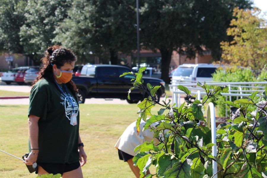 Coppell East science teacher Jodie Deinhammer supervises the work of her students at the Coppell Middle School East garden on Friday. Deinhammer created this garden to help foster students' learning.