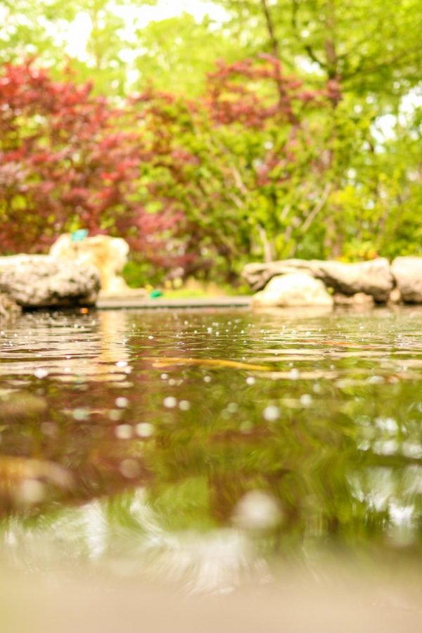 Pools of water are placed around at the Dallas Arboretum and Botanical Garden on Sunday. The arboretum has a variety of events such as Artscape, Summer of Sculpture and Cool Thursdays Concert Series.