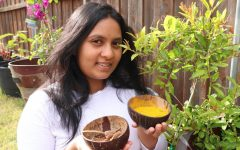 Coppell High School junior Aditi Thakur holds bowls of turmeric and spices used in the ancient practice of Ayurveda. Thakur was inspired by her mother to study Ayurveda, in which she grows and buys medicinal herbs in order to implement different practices of medicine into her life.